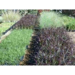Groundcovers and climbers