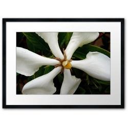 "Gardenia ""Forever more"""